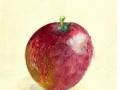 Granny's apple